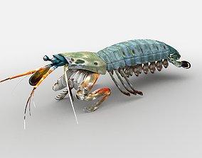 3D asset Mantis Shrimp Squill