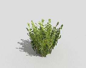 Low poly Plant park 3D asset game-ready