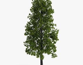 3D model linden tree 02