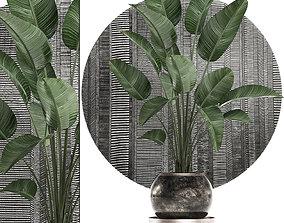 3D model Decorative plants in flower pots 3