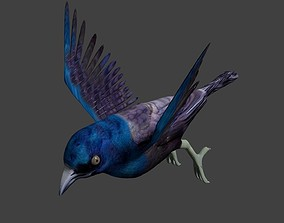 3D common grackle animated