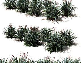 New Zealand Flax - Phormium tenax 3D