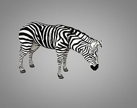3D asset animated Zebra