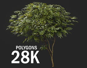 Forest tree 3D model