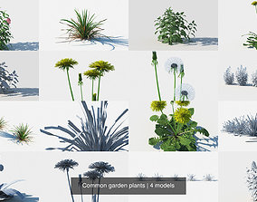 3D Common garden plants