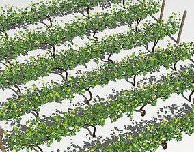 Vineyard bush 3D model low-poly