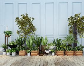 pot Plants 3D model