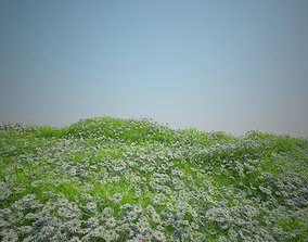 3D model Camomile and Coastal grass and Plant