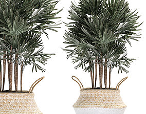 Decorative palm tree in rattan basket for 3D model 1