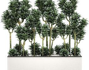 Dracena Compacta in a flowerpot for interior 3D model 1