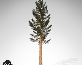 XfrogPlants Giant Sequoia 3D