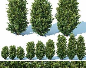 Taxus Baccata Nr7 Three sizes H65-130 cm 3D