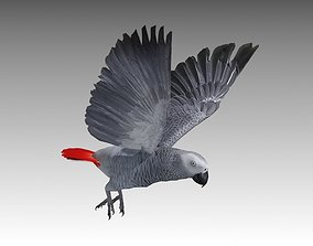 Grey Parrot Animated 3D asset