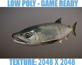 Salmon 3D asset low-poly