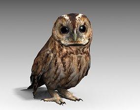 Tawny Owl 3D asset