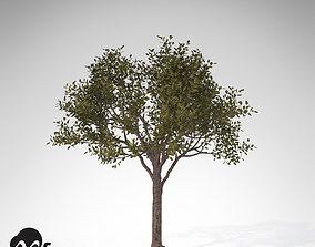 3D model XfrogPlants Rubber tree