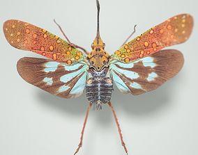 Cicada Saiva Gemmata Laos Insect 3D asset