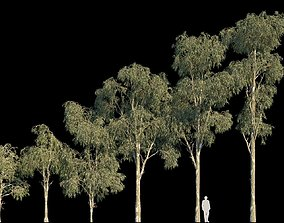 3D Eucalyptus Globulus