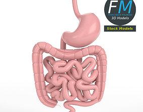 Anatomy human gastrointestinal tract 3D
