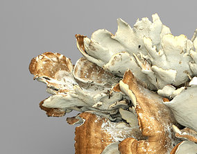3D 8K Big Mushroom - Meripilus Giganteus
