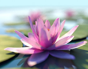 Water Lily Lotus Plant 3D model