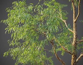 3D model XfrogPlants Southern Blue Gum - Eucalyptus