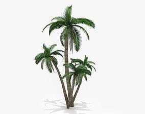 Palm tree pot-plant 3D model VR / AR ready