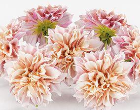 Garden Dahlia Pink 3D asset