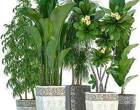 3D model tropical Collection Exotic plants