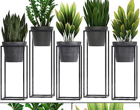 Collection Exotic plants 3D