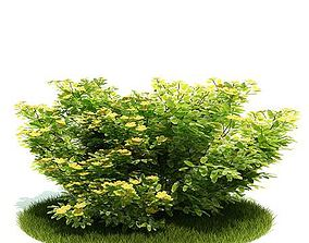 3D model Planted Green Bush