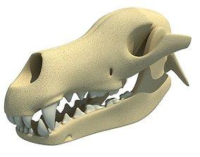 Bones of Dog Skull 3D model