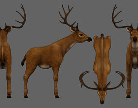 3D model rigged VR / AR ready Deer animal