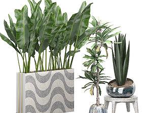 3D model Potted plants Set 48