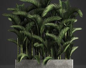 Decorative palms Dypsis 3 3D model