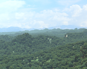 Forest mountain 3d model
