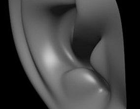 human ear 3D