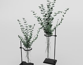 3D model Eucalyptus In Laboratorium Jar