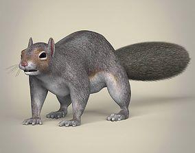 Realistic Squirrel 3D