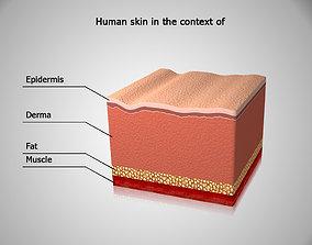 Human skin in the cut 3D model various-models