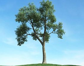3D Deciduous Tree In Field