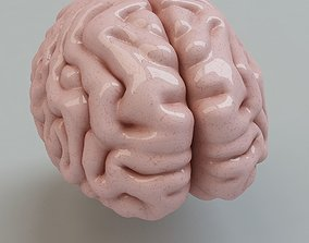 modelscience Human Brain 3D model