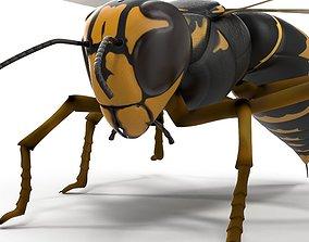 3D Wasp Vespula