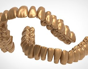 Upper and lower jaw teeth anatomy 3D model