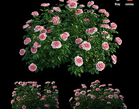 nature Rose plant set 24 3D