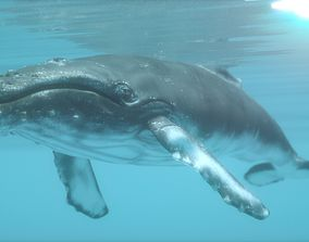 3D asset low-poly humpback whale