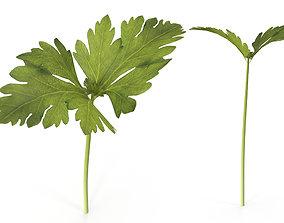 3D model Celery