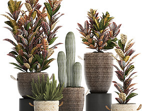 3D model Collection of exotic plants Croton 430