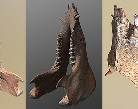 game-ready photorealistic 3D scanned wild boar lower jaw