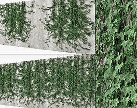 Ivy wall 10 nature 3D model